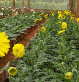 Sampath flora