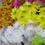 Vimandee Flora & Plant Nursary