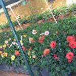 සිසිකිරණ මල් පැළ තවාන Sisikirana  Flower Plant Nursery