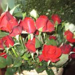 සිසිකිරණ කැපුම් මල් ව්යාපෘතිය                                                                                 Sisikirana Cut Flower project