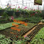 Thurusisila Plant Nursery