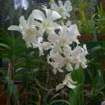 Pelwatte plant nursery