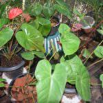 YENULI PLANT NURSERY