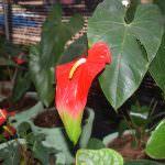 Isuru plant nursery