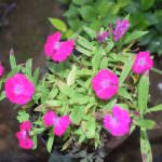 Flowery plant nursery