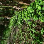 Sithija plant nursery