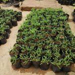 Jayananda Plant Nursary