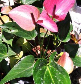 Supipi Nature  Plants