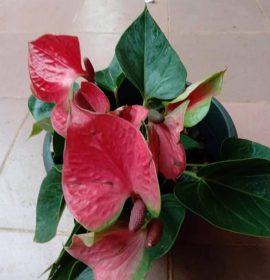 Misindu Plants House